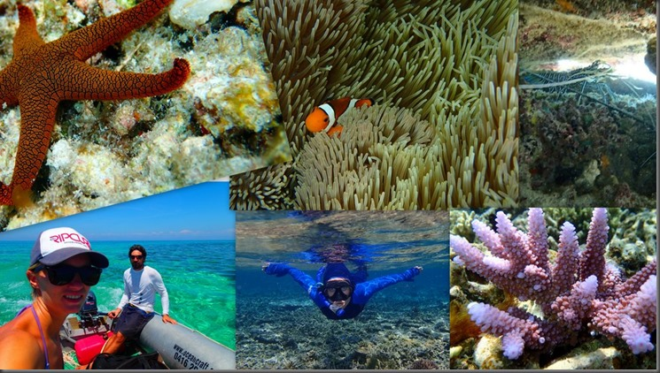 apo reef snorkeling scuba collage