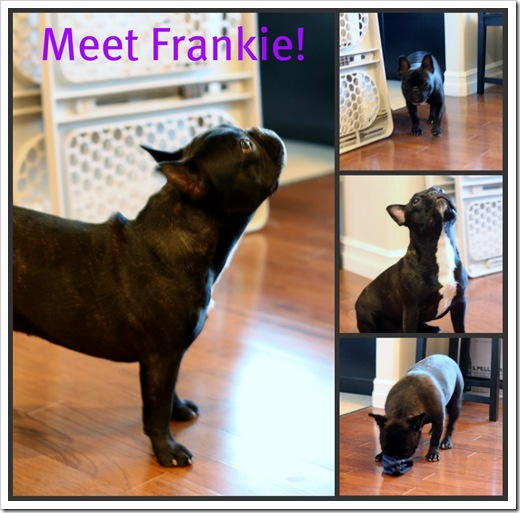 Frankie_collage