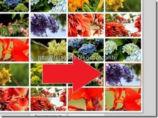 seleção de imagens - montagem de fotografias