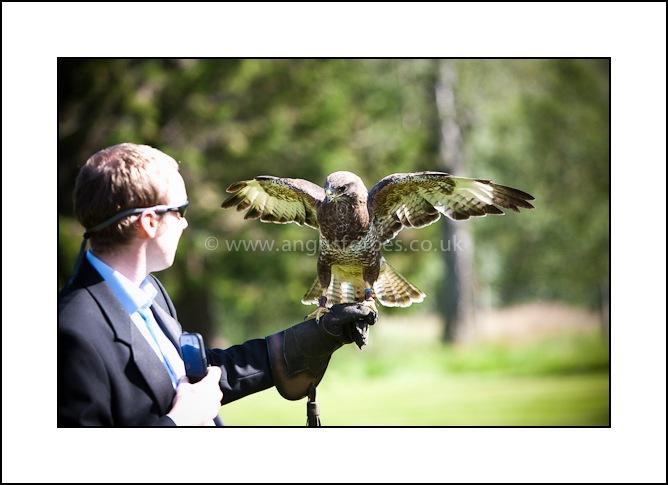 falconry display at scottish wedding