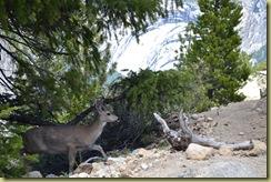 Panorama Deer