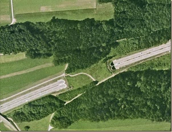 Ponts pour animaux - passages à faune (16)