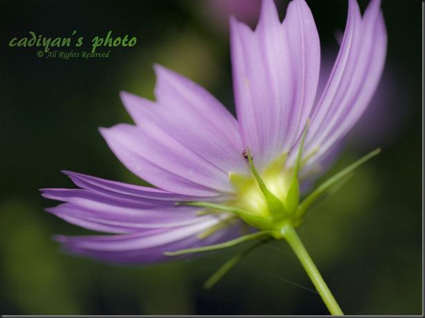 D700_2012-09-10_015