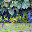 Wineries in Mendoza