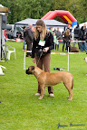 20100513-Bullmastiff-Clubmatch_31035.jpg