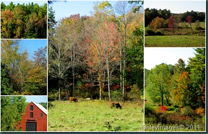 fall colors collage1009