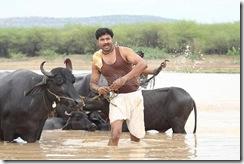 Sengathu Bhoomiyile 6507