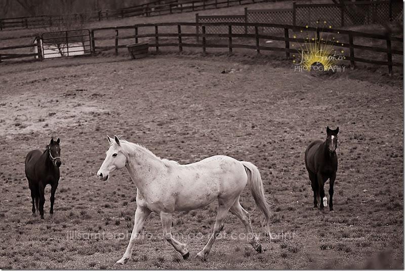 bw-horse-5495