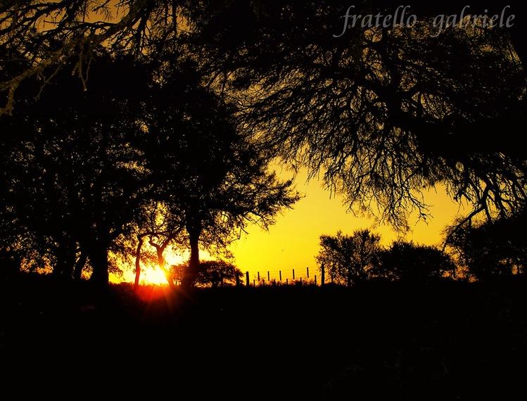 Argentina,Córdoba,bosquedeNoche-debrujaMar-0718