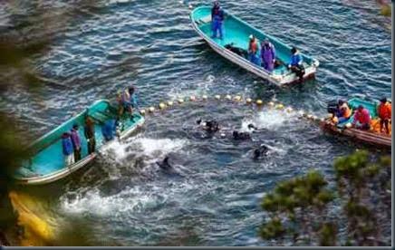 cerco-aos-golfinhos-japão