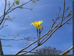 P3F.flora yFaunaOct09 002