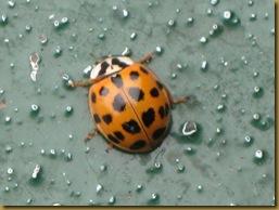 IMG_0036 Ladybird aboard