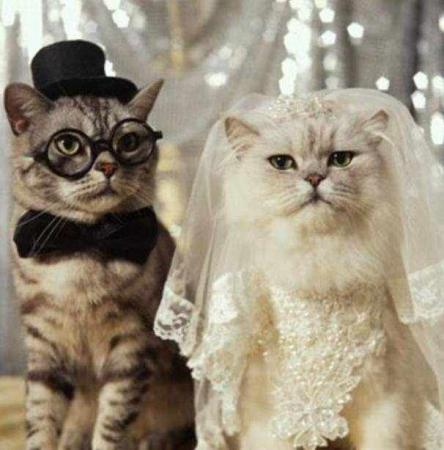 Two cats decided to marry..