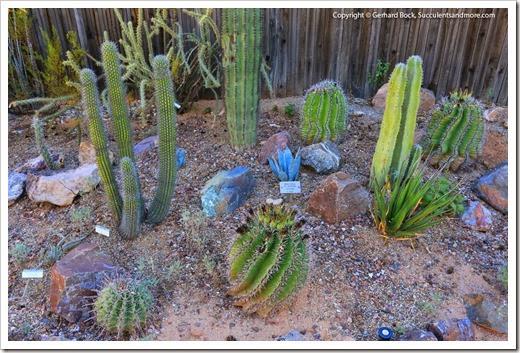 131203_TucsonBotanicalGarden_063