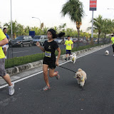 Pet Express Doggie Run 2012 Philippines. Jpg (64).JPG