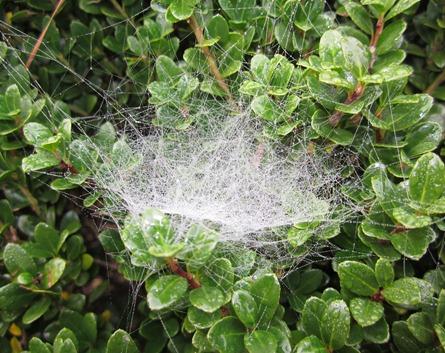 SPIDER WEB (3)