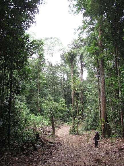 La piste de Crique Tortue à l'ouest de Saut Athanase (Guyane), 22 novembre 2011. Photo : J.-P. Decroo
