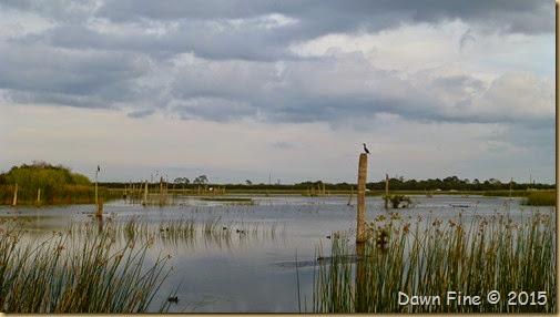 Viera Wetlands (61)