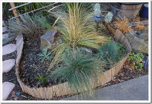 Liberating succulents from smothering grasses