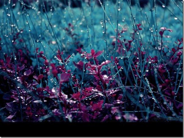 Lindas fotos da chuva (8)