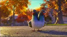 01 le pigeon