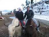 yak ride in kufri.jpg