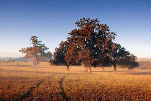 39. Añadir otoño a sus paisajes