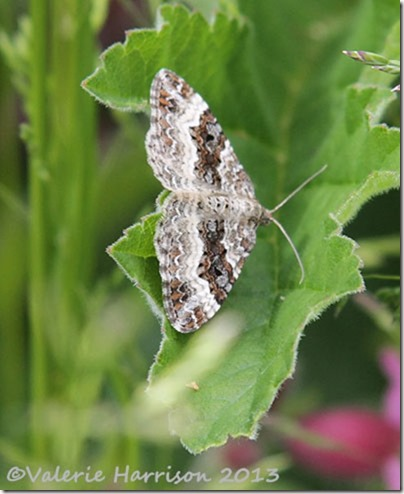 9-common-carpet