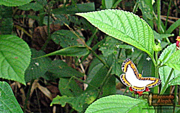 Viaje Amazonas Maloka Makuna  6
