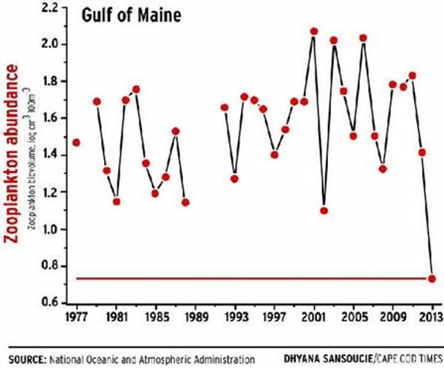 Zooplankton abundance in the Gulf of Maine, 1977-2013. In 2013, scientists observed the lowest-ever spring plankton bloom in the Northeast Shelf Large Marine Ecosystem. Data from NOAA. Graphic: Dhyana Sansoucie / Cape Code Times