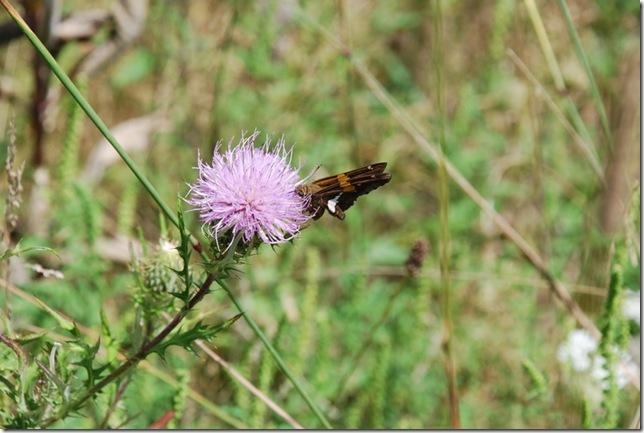 08-22-2011 B Shenandoah NP 010