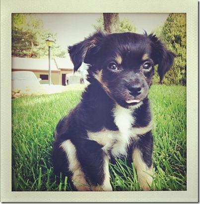 kipperthedog