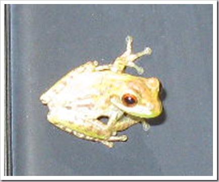 08-06-tiny-frog