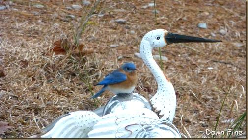 Birds and buds_009