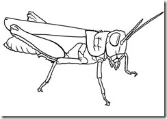 insects_coloring_pages (14)