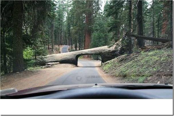 美國加州紅杉公園內一顆倒下的樹(因地制宜,不過有限高就是了)