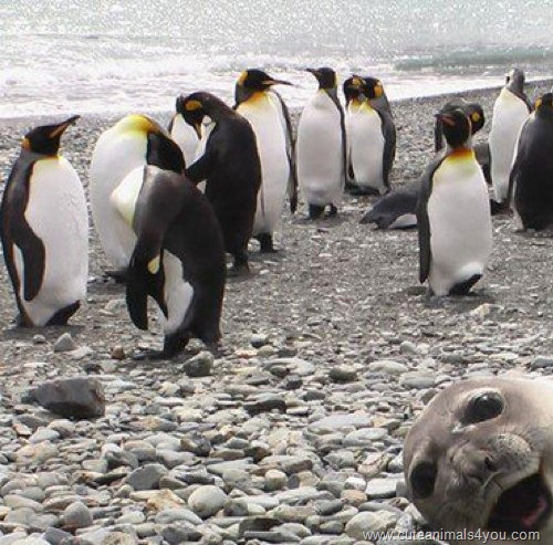 50_Funniest_Animal_Photobombs_Of_All_Time_18