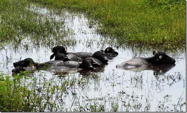 Pantanal_DSC08432
