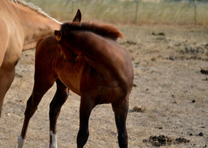 Horses16