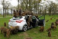 Hyundai-i30-Monkeys-3