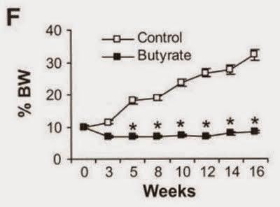Butyrate body fat