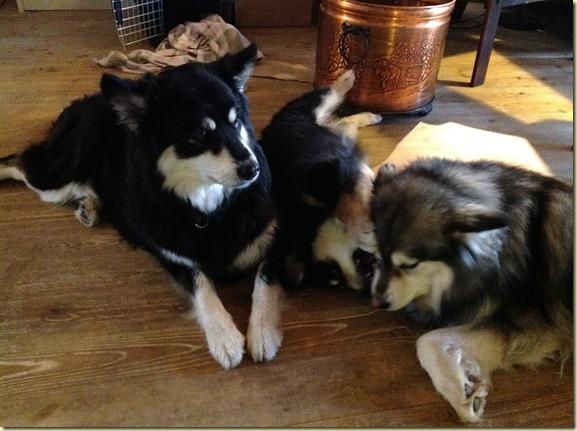 3 hunder