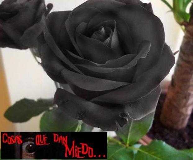FloresNegras-CqdM-0706