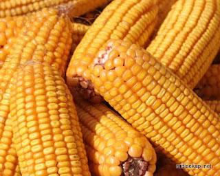 – Prix de maïs en hausse. fboizard.blogspot.com
