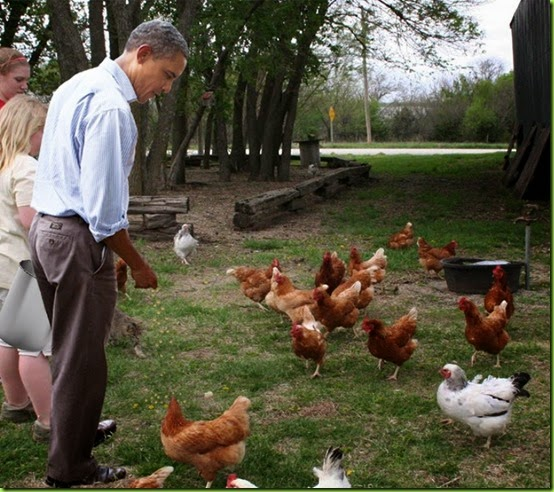 Barack-Obama-Feeding-Chickens-91273