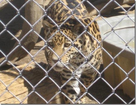 07 29 12 - Animal Ark (49)