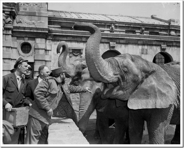 fidel-castro-bronx-zoo-1959 (1)
