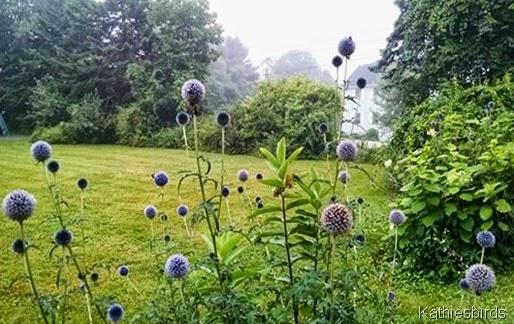 7-28-14 misty morn