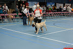 20130510-Bullmastiff-Worldcup-0187.jpg