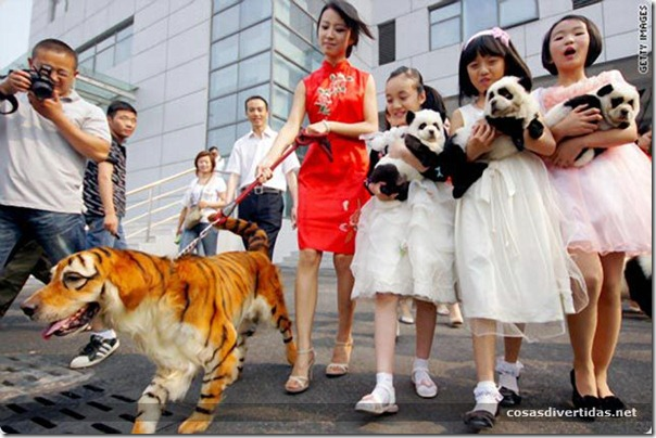 cosasdivertidas animales teñidos  (2)